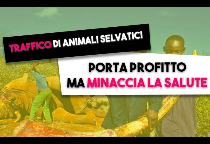 animali selvatici